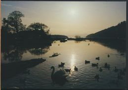 °°° 8987 - SCOTLAND - LOCH LOMOND - A FAMILY DAY OUT COMES TO A CLOSE AT BALMAHA °°° - Argyllshire