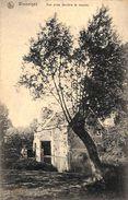 Wasseiges - Vue Prise Derrière Le Moulin (1911, Ed. Léonard, Maison Ad. Delhaize) - Wasseiges