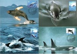 AUSTRALIAN ANTARCTIC TERRITORY 1995 Whales & Dolphins: Set Of 4 Maximum Cards CANCELLED - Maximumkarten