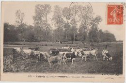 CPA 41 SALBRIS Vaches Pâturages Aux Pintingues Montboulan 1916 - Salbris