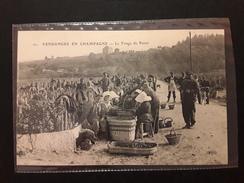 CPA VENDANGES EN CHAMPAGNE - Le Triage Du Raisin - Frankreich