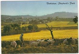 Bethlehem - Shepherd's Field - (Sheep And Spepherd)  - (Israël) - Israël