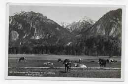 (RECTO / VERSO) SCHWANSEE - N° 563 - H. STRAUSBERG - VACHES - BEAU CACHET - FORMAT CPA VOYAGEE - Strausberg