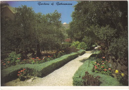 Jerusalem - The Old City - Gardens Of Gethsemane  - (Israël) - Israël