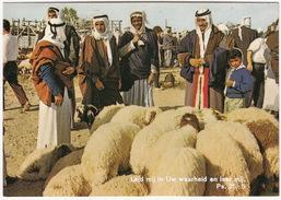 Ben-Sèba - Marktdag/Marketday Sheep - (Israël) - Israël
