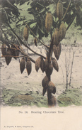 Vintage 1900-1905 - Chocolate Tree - Duperly & Sons Kingston Jamaica No. 24 - Undivided Back - VG Condition  - 2 Scans - Arbres