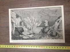 ENV 1880 EXPOSITION MARITIME DU HAVRE BAC DE L AQUARIUM ECAILLES CREVETTES DE MESNEL - Vieux Papiers