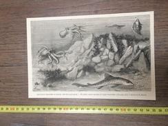 ENV 1880 EXPOSITION MARITIME DU HAVRE BAC DE L AQUARIUM POULPE CHIEN DE MER PLIES DE MESNEL - Vieux Papiers