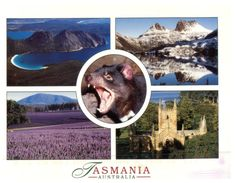 (888) Australia - (with Stamp At Back Of Card) - TAS - With Tassie Devil - Australie