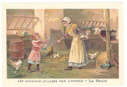 Chromo : Les Animaux Utilisés Par L'homme : La Poule ( Oeufs, Poulailler ) - Autres