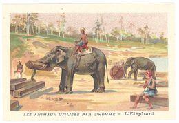 Chromo : Les Animaux Utilisés Par L'homme : L' éléphant - Autres