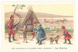 Chromo : Les Animaux Utilisés Par L'homme : Le Renne ( Lapons, Esquimaux ) - Chromos