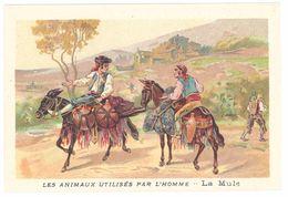 Chromo : Les Animaux Utilisés Par L'homme : La Mule ( Mulet ) - Autres