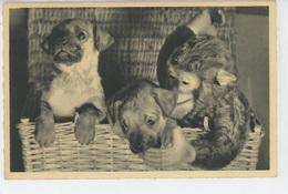 CHIENS - DOG - Jolie Carte Fantaisie Chiens Et Singe En Peluche (monkey ) - Hunde