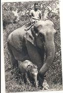 T 5462 ELEPHANT DES INDES - Elephants