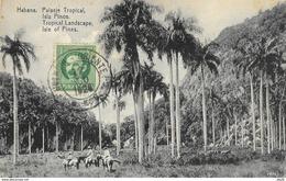 Cuba - Habana (La Havane) - Paisaje (Landscape) Tropical, Isla Pinos (Isle Of Pines) - Cartes Postales