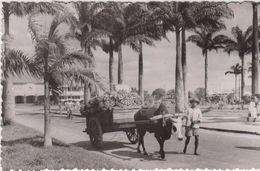 Madagascar Fotografica Agosto 1960 Carro Trasporto Banane - Madagascar