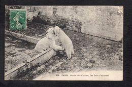Animal / Paris : Jardin Des Plantes,les Ours S'amusent - Ours