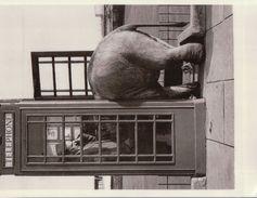 1560A  ELEPHANT  NON ECRITE - Elephants