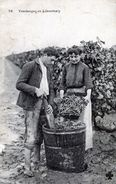 Métiers Viticulture Vignes -  Vendanges En Libournais  P30b - France