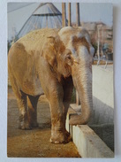 "528 - Cartolina Parco Faunistico ""Le Cornelle"" Valbrembo Elefante Elephant - Elefanti"