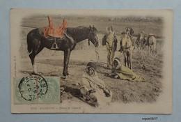 Algerie - Dans Le Désert - Chevaux - 1905 - Escenas & Tipos