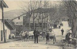 CAMBO, Marchands De Bestiaux Allant Au Marché D'ESPELETTE, AVENUE DE LA GARE - Cambo-les-Bains