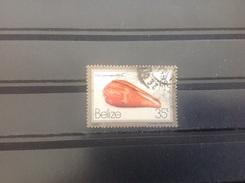 Belize - Schelpen (35) 1980 - Belize (1973-...)