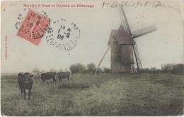AGRICULTURE - Moulin à Vent Et Vaches Au Pâturage - Viehzucht