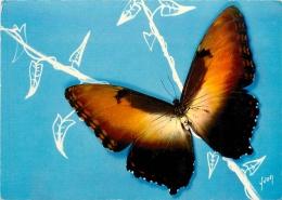 PAPILLON EXOTIQUE - Vlinders