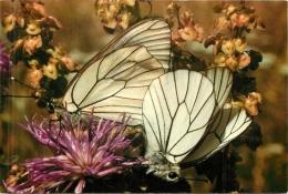 PAPILLON EXOTIQUE DE HAUTE GOULAINE - Schmetterlinge