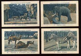 PARC ZOOLOGIQUE DU BOIS DE VINCENNES 4 VUE CARTE 9,5X6  ZÈBRE AFRIQUE LIONS ELEPHANT CHAMEAUX ET DROMADAIRES - Autres