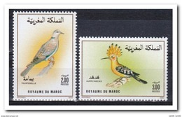 Marokko 1990, Postfris MNH, Birds - Marokko (1956-...)