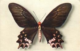 PAPILLON PAPILIO SEMPERI - Vlinders