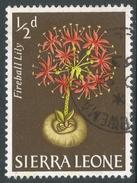 Sierra Leone. 1963 Flowers. ½d Used. SG 242 - Sierra Leone (1961-...)