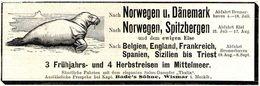 Original-Werbung/ Anzeige 1907 - DÄNEMARK /NORWEGEN /SPITZBERGEN /DAMPFER THALIA/ BADE'S SÖHNE - WISMAR- Ca. 135 X 45 Mm - Werbung