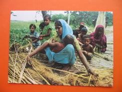 Jute-der Reichtum Bangladeschs.Frauen Und Kinder Arbeiten Hart,um Zu Uberleben - Bangladesh