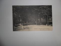 Westmalle  :  Beukendreef Aan De Trappisten  -  Hoelen N°5094 - Malle