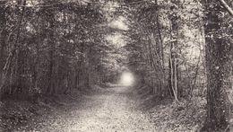 CPA 1915 CARTIGNY (près Péronne) - La Grande Allée Du Parc Du Château De Biars (A181, Ww1, Wk 1) - France