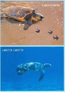 Loggerhead Sea Turtle Caretta Caretta, 2 Postcards From Greece Grèce Griechenland Grecia - Schildpadden