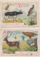 7AJ675 CHROMO Lot De 2  ALPHABET HISTOIRE NATURELLE A ET Y (abimé) 2 SCANS - Fiches Illustrées