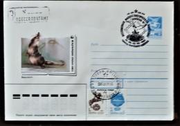 URSS, RUSSIE,  WWF, RONGEUR, Entier Postal Avec Obliteration Thematique 1991 - Brieven En Documenten