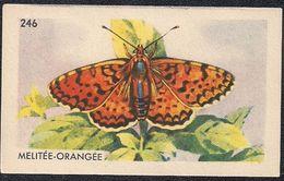 246  -  Entremets Franco-russe  -  Mélitée - Orangée  -  Papillon  - - Trade Cards