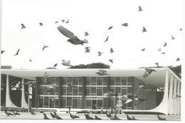 Brasilia: Chasing Pigeons- Praça Dos Três Poderes (Three Powers Square),adressée Andorra, Avec Timbre à Date Arrivée - Brasilia