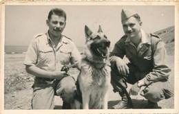 Photographie-ancienne Photo Armée Militaires Avec Chien Berger Allemand - Armée De Terre ? - Guerra, Militari