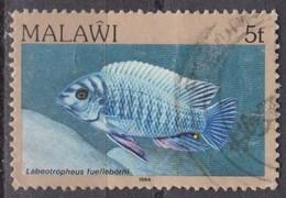 Malawi, 1984 - 5t Labeotropheus Fuelleborni - Nr.429 Usato° - Malawi (1964-...)