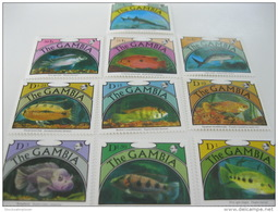 Gambia-Fish-Marine Life - Fische