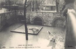 Crue De La Seine - Paris - La Fosse Aux Ours Envahie Par Les Eaux (éditeur ELD) - Inondations De 1910