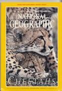 National Geographic Magazine Vol. 196, No. 6, December 1999 CHEETAHS - Travel/ Exploration