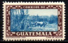 05901 Guatemala 359 Cana De Açúcar NN - Guatemala